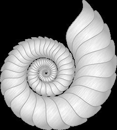 Cape May Marina Nautlius Shell